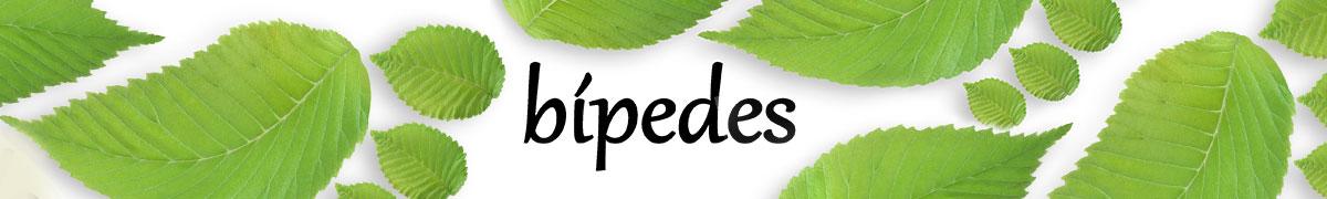 Bipedes